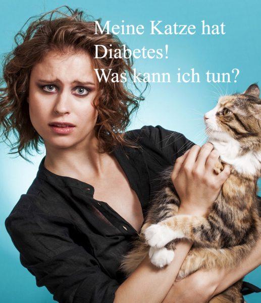 BestCat bei Katzen mit Diabetes